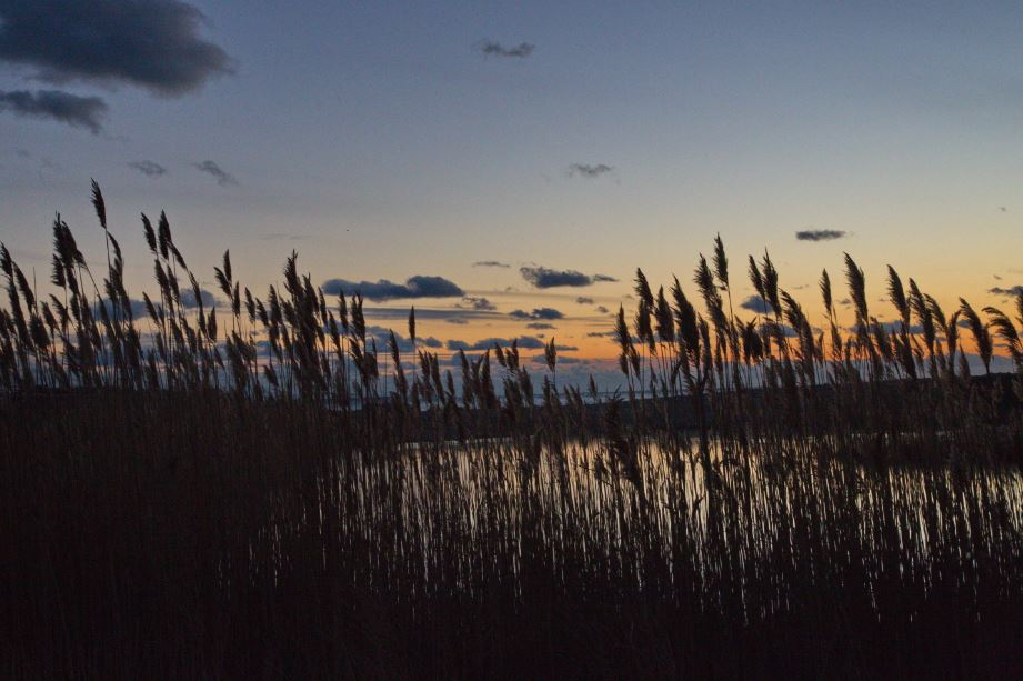 through-the-reeds-1